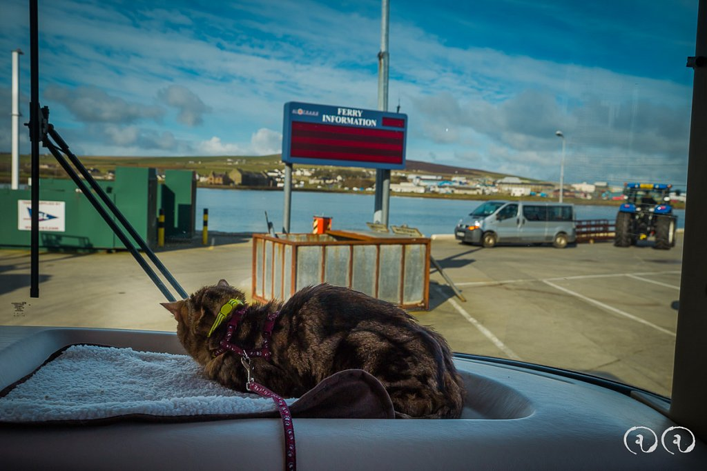 Teddy on the dash in the North Isles Ferry Queue